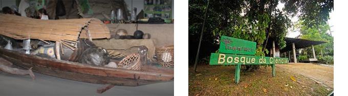 Bosque da Ciência Manaus